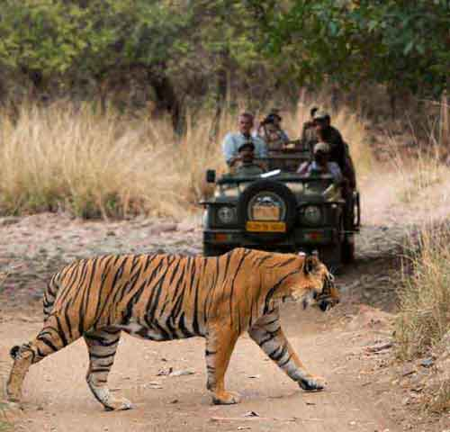 Jaipur with Ranthambore Tour